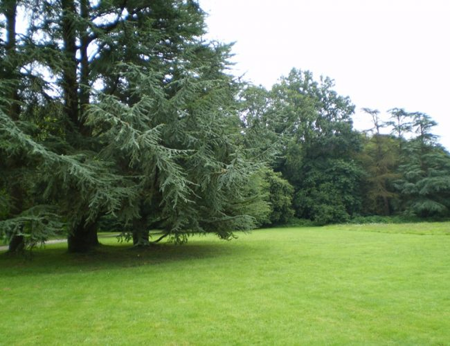 parc trees nature ceder hotel guest house brittany